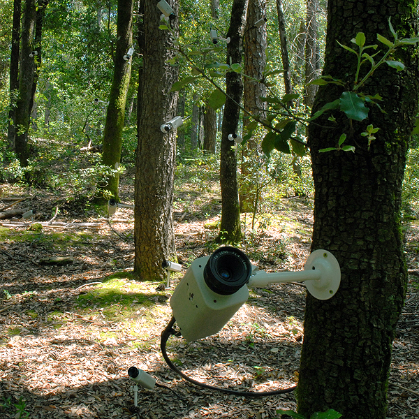 PRIVATE EDEN art installation by Giampaolo Marcantoni (Italy) for WU+S   (wakeupandsleep.org).  A Nature polluted by CCTV cameras that spy everything. A Private Eden,   where nothing is private, where everything is controlled.